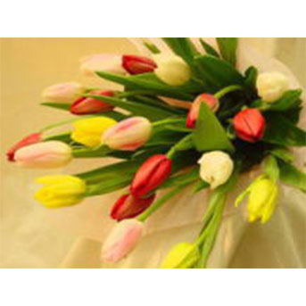 チューリップ 花束 B-1002