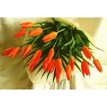 チューリップの花束 B-1003