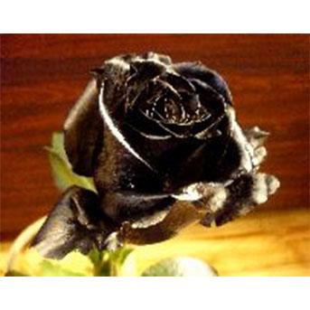 クリスマス 花束 黒薔薇