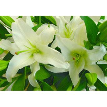 ユリ 花束 季節のフラワーギフト
